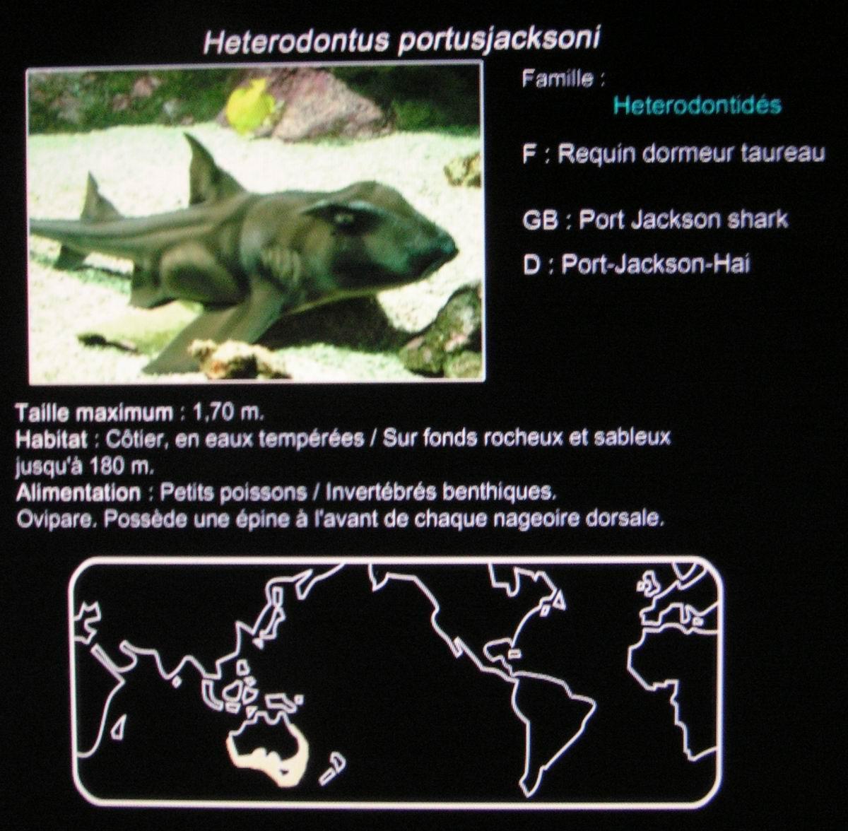Index Of Nature Animaux Requin
