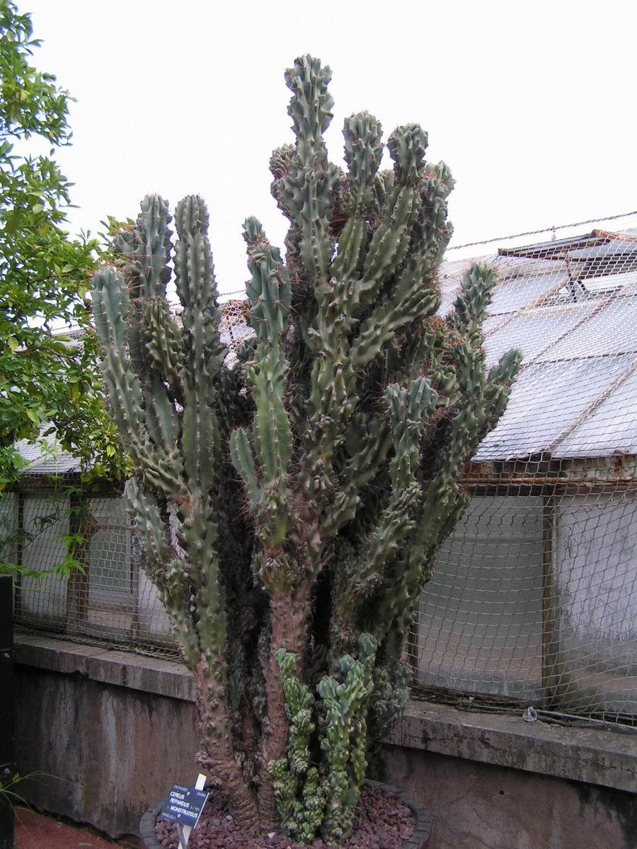 cactus artificiel pas cher full size of plante exterieur. Black Bedroom Furniture Sets. Home Design Ideas